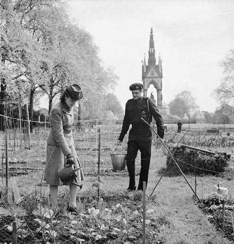 _Allotments_in_Kensington_Gardens,_London,_all_part_of_the_'Dig_for_Victory_'_scheme_in_1942._D8336